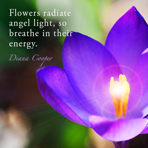 DC Quote_Flowers radiate angel light